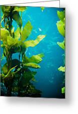 Kelp One Greeting Card