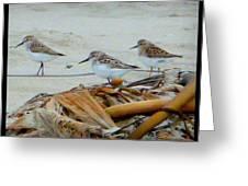 Kelp Standing Visitors Greeting Card