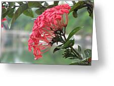 Kerala Beauty Greeting Card