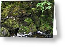 Ketchikan Riverbank Greeting Card