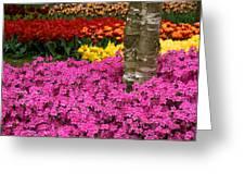 Keukenhof Floral Strata Greeting Card