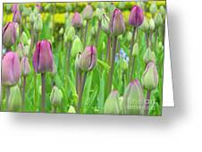 Keukenhof Gardens 12 Greeting Card
