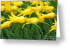 Keukenhof Gardens 13 Greeting Card