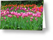 Keukenhof Gardens 14 Greeting Card