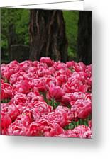 Keukenhof Gardens 16 Greeting Card