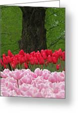 Keukenhof Gardens 18 Greeting Card