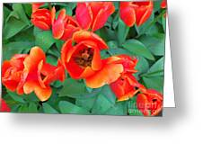 Keukenhof Gardens 2 Greeting Card