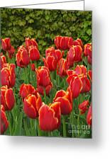 Keukenhof Gardens 28 Greeting Card