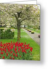 Keukenhof Gardens 33 Greeting Card