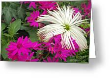 Keukenhof Gardens 38 Greeting Card