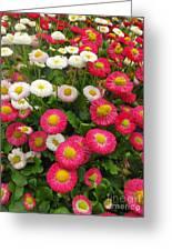 Keukenhof Gardens 39 Greeting Card