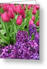 Keukenhof Gardens 40 Greeting Card