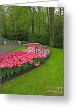 Keukenhof Gardens 51 Greeting Card