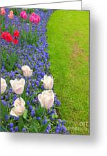 Keukenhof Gardens 55 Greeting Card