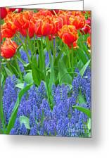 Keukenhof Gardens 6 Greeting Card