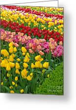 Keukenhof Gardens 72 Greeting Card