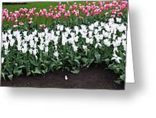 Keukenhof Gardens 8 Greeting Card
