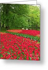 Keukenhof Gardens 88 Greeting Card