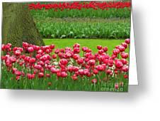 Keukenhof Gardens 91 Greeting Card