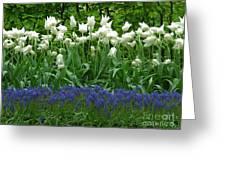 Keukenhof Gardens 92 Greeting Card