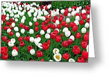 Keukenhof Gardens Panoramic 20 Greeting Card