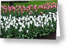 Keukenhof Gardens Panoramic 9 Greeting Card