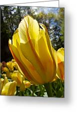 Keukenhof Yellow Tulips Greeting Card