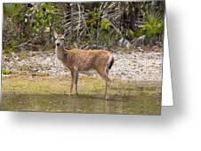 Key Deer Portrait Greeting Card