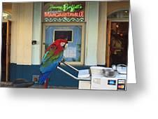 Key West - Parrot Taking A Break At Margaritaville Greeting Card