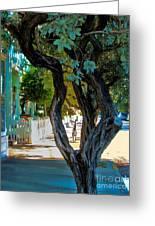 Key West Beauty Greeting Card by Claudette Bujold-Poirier