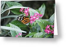 Key West Butterfly Conservatory - Monarch Danaus Plexippus 2 Greeting Card