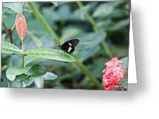 Key West Butterfly Conservatory - In Black White And Orange Greeting Card