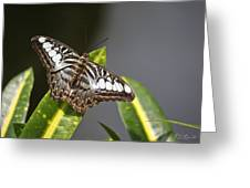 Key West Butterfly Conservatory - In Brown And White Greeting Card