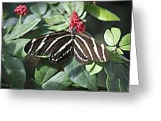 Key West Butterfly Conservatory - Zebra Heliconian Greeting Card