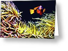 Key West Fish Greeting Card