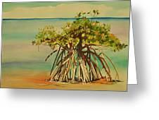 Keys Mangrove Greeting Card