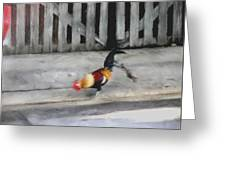 Keywest Florida Rooster Greeting Card