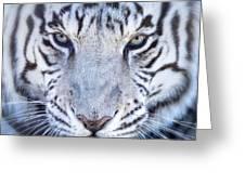 Khan The White Bengal Tiger Greeting Card