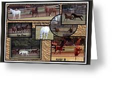 Horses Kickin It  Greeting Card