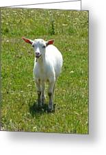 Kid Goat Greeting Card