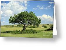 Kigelia Pinnata Tree Greeting Card