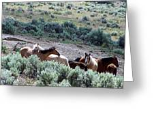 Kiger Mustangs At Mineral And Water Source Greeting Card