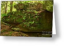 Kildoo Trail Stoned Turtle Greeting Card