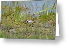 Killdeer Hatchling Greeting Card