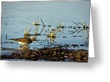 Kildeer Hunting For Worms Greeting Card