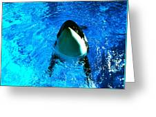 Killer Whale Greeting Greeting Card