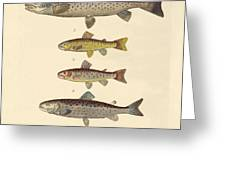 Kinds Of Trouts Greeting Card