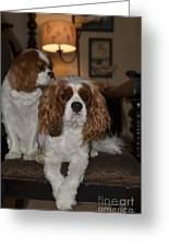 King Charles Dogs Greeting Card