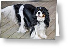 King Charles On The Boardwalk Greeting Card