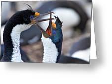 King Cormorants Greeting Card
